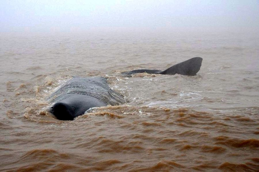 鲸鱼搁浅,有人想着救它,而有人却想着伤害它(画面有点血腥,受不了……)