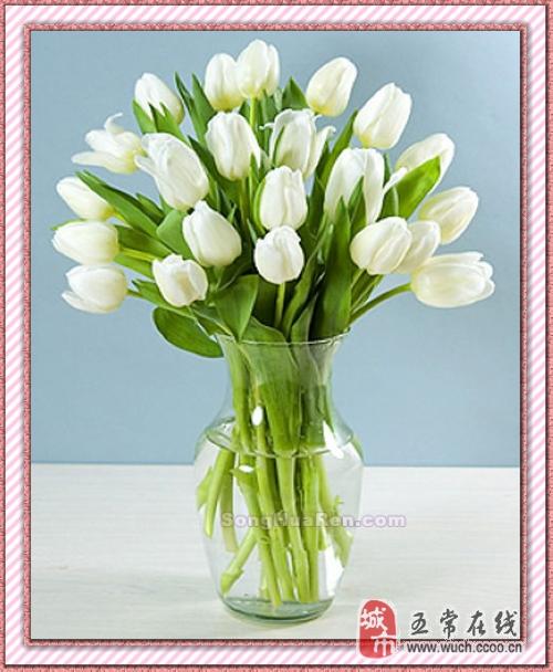 花瓶郁金香