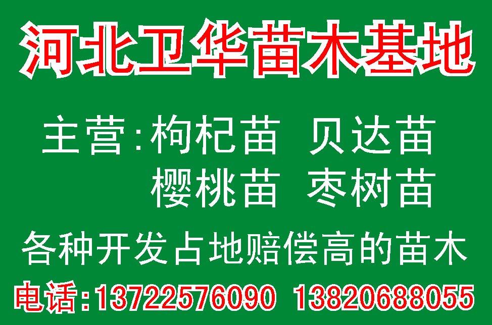 出售枸杞樹苗 開發占地賠償高的樹苗出售 苗木