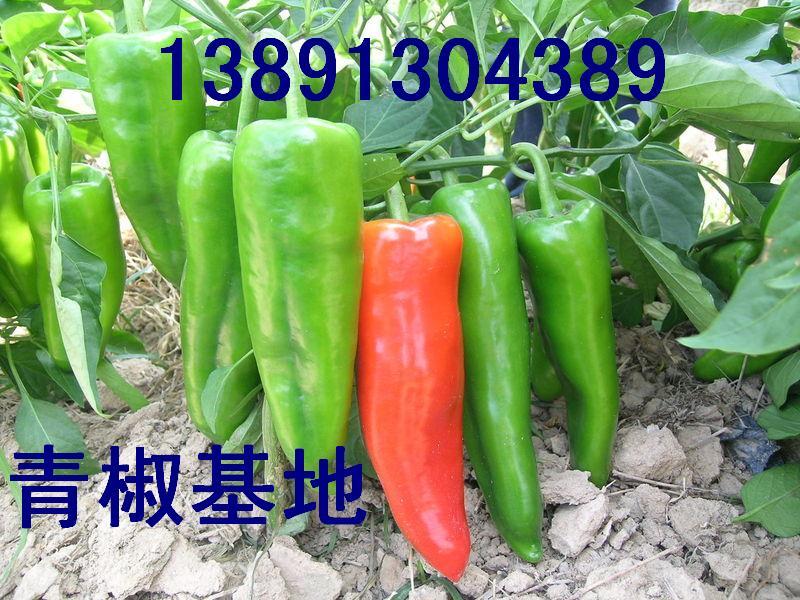 陜西青椒基地,花生,紅蘿卜產地