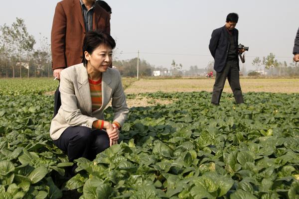 常年大量批發上海青、黃心菜、蔥、蒜苗等!