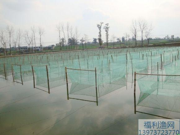 黄鳝/泥鳅养殖网箱