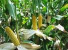 农业新技术转让