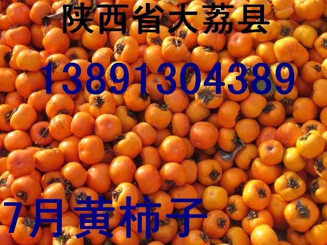 陜西柿子基地金錢柿子尖頂柿子日本甜柿子產地