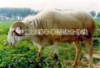 2011年肉牛�N羊真��行情