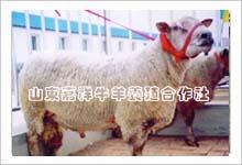 牛羊价格最低服务到位质量有保证