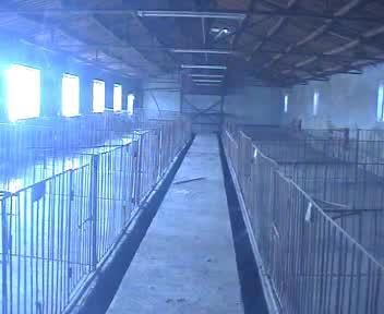 出售大型养猪场