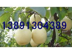 陜西早酥梨 酥梨 紅香酥梨基地中華玉梨產地碭山酥梨