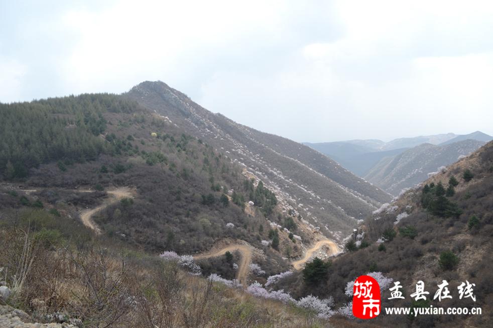 盂县尖山风景区第二届桃花节开幕