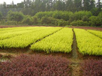 市中区花木基地(工业园区)苗圃10亩