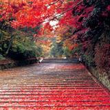 世界上最美、最有意境的十三条路,你喜欢哪个呢?