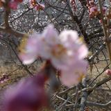 2011-4-9   喀左风光