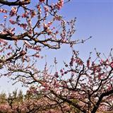 春色满园关不住,一枝红杏出墙来。