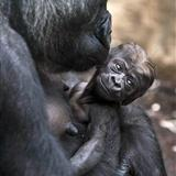 [贴图]整理一下可爱的猴子照片,很经典的