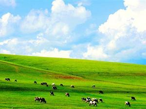 内蒙古草原特产销售联盟