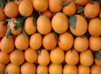 奉节脐橙销售