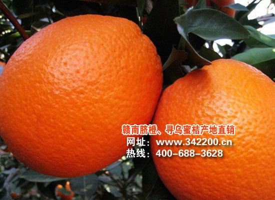 2011年贛南臍橙開始接受預訂,歡迎合作洽談!
