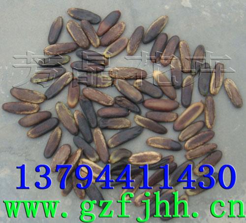凤凰木种子,秋枫种子,海南菜豆种子,幌伞枫种子