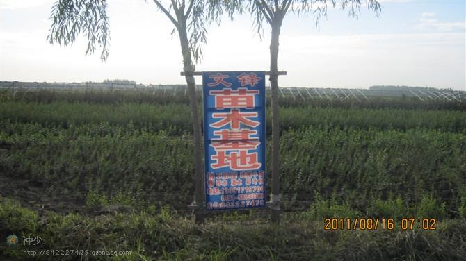黑龙江省哈尔滨市松北区李满苗圃