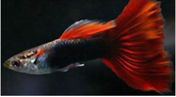出售自家繁殖的熱帶魚水草
