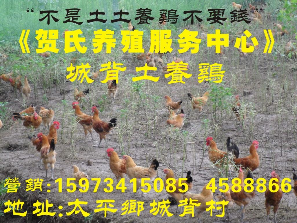 """纯正城背土养鸡""""不是土鸡不要钱""""团购优惠价"""