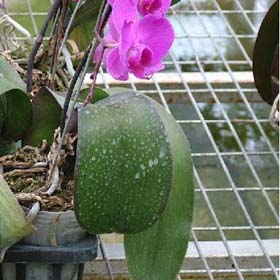 生產銷售溫室苗床網,熱鍍鋅網片,鐵絲網,育苗網