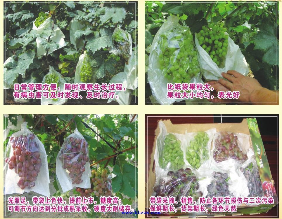 榮豐農業新型葡萄袋