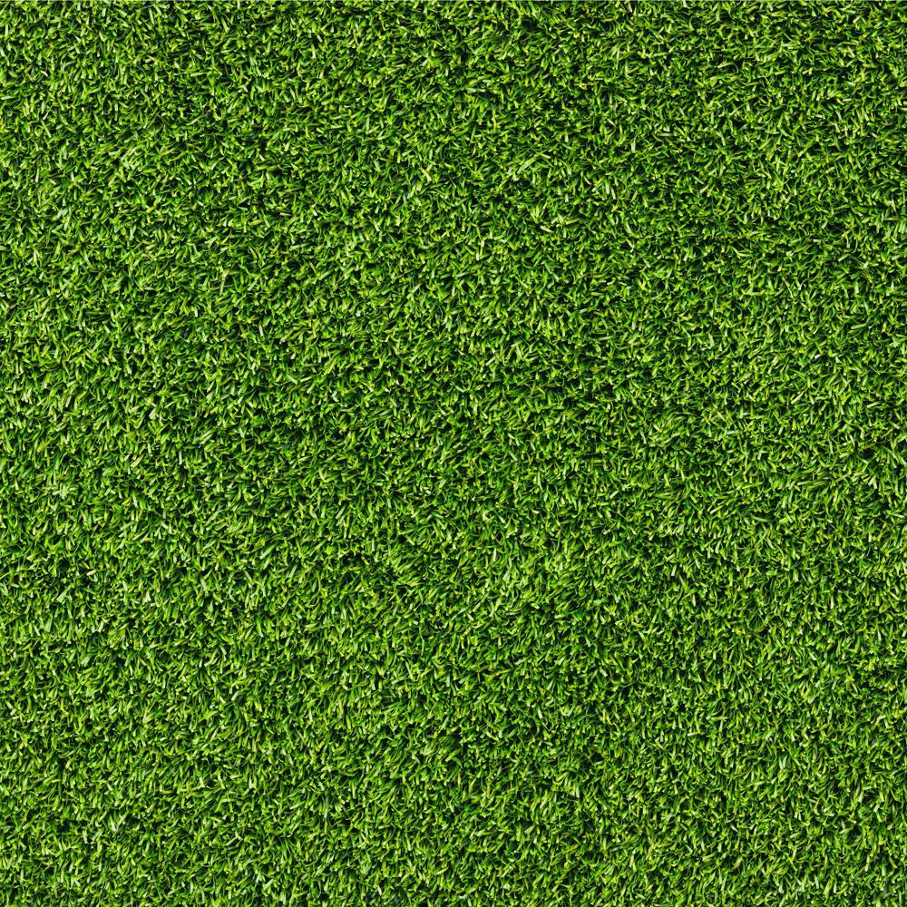 海南绿化网 -台湾草