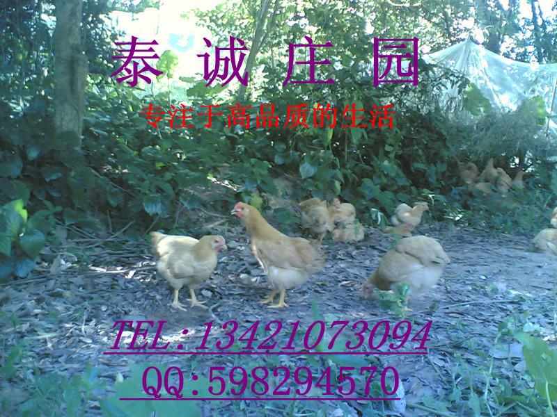 自建庄园纯果林五谷杂粮散养的土鸡蛋寻找实体店销售