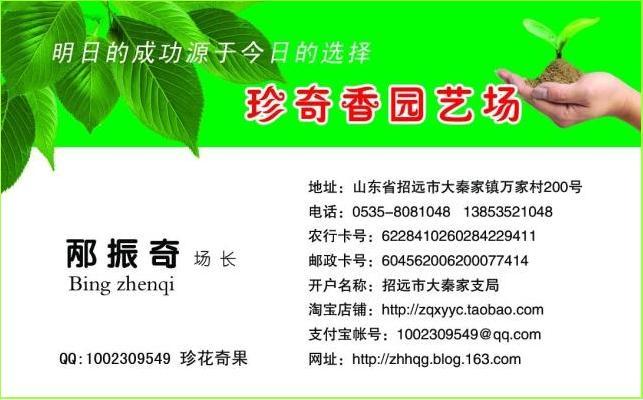 果樹新品種苗木:薄皮核桃 柱狀蘋果 大櫻桃苗木