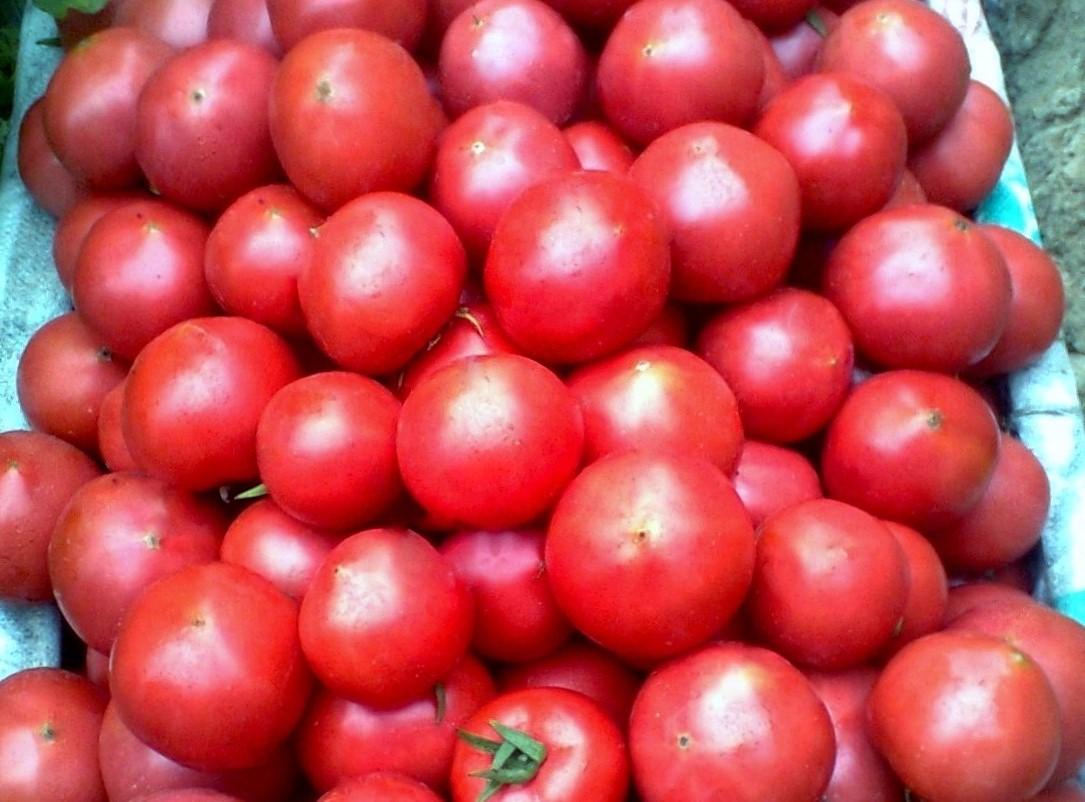 最好吃的寨子西红柿