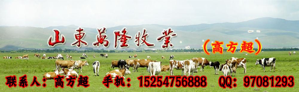山东万隆牧业出售大量种牛羊、波尔山羊