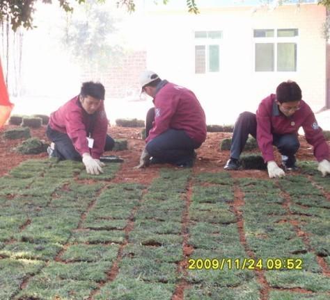 海南草皮网 -台湾草 -夏威夷草