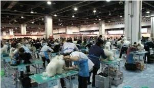 學寵物美容師選傲雄FCI和KKF雙證高薪就業在眼前