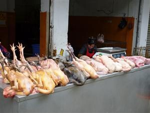 屠宰鸡、鸭、鹅、兔
