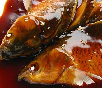 松鼠桂鱼PK西湖醋鱼_2