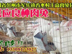 王高肉兔场