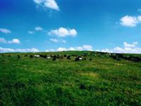 1009万里草坪―放马坪