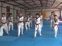 53国威跆拳道