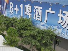 8+1啤酒广场