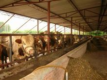 会泽东山良种牛养殖加工公司
