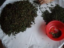 安溪兰香茶业