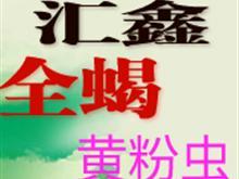 枣阳汇鑫全蝎黄粉虫生态养殖园