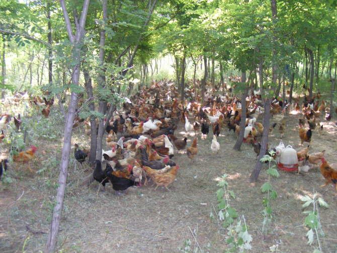 漫山遍野捡鸡蛋